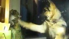 Köpek vuruyor kedi karşılık veriyor