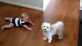 Köpek ve Bebek Dans Ediyor