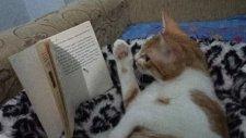 kitap okuyan kedi boncuk