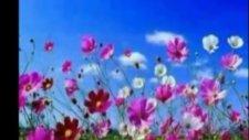 İkimiz bir fidanın güller açan dalıyız