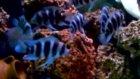 akvaristhb frontoza