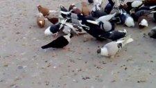 Diyarbakır isimli GüvercinKüme Video 11