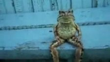Efkarlı kurbağa