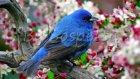 Çoçuk Şarkıları Mini Mini Bir Kuş