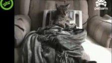 Kedinin masaj koltuğu keyfi
