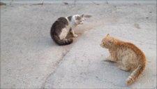 Kedilerin Kavgası