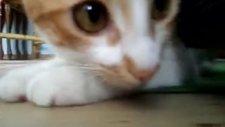 saklanan kedi boncuk