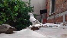 video 2012 05 19 12 40 16