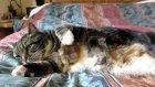 civciv'den korkan kedi