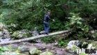 tree walk faıl