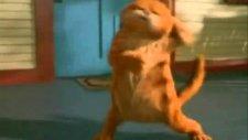 Bas Gaza Garfield ) )