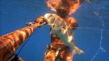 zıpkınla balık avı - mırmır,çupra,levrek,akya,sinarit,kral