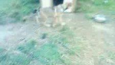 Küçük Köpek Teo