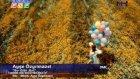 Ayşe Özyılmazel Su Gibi Gel Orjinal Video Klip 2012