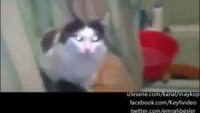 Tuvaleti Basan Sahibinin Suratına Kapıyı Kapatan Kedi
