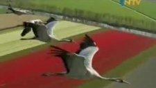 Kuşbakışı dünya Bölüm 3 - parça 4