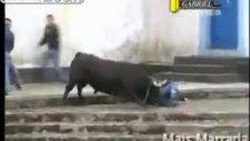 Kızgın boğalar - Angry Bulls