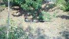 kara yılanların çiftleşmesi