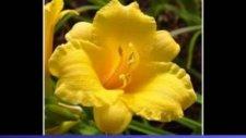 Ezan Çiçekleri Açarken Geldin - Bedirhan Gökçe-Elif Nur Gökçe