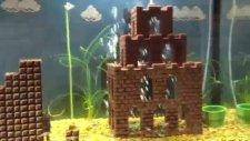 Akvaryumda yaşayan Mario