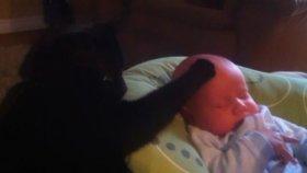 Bebek Kedi Kafasını Sevmeyince Uyuyamıyor
