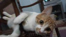 Keyif Yapan Kedi