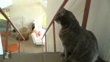 Saldırgan Kediler