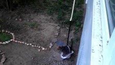 Kedi Asansörü