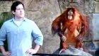 Taklitçi maymun
