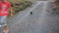 Çılgın Köpek