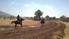 Rahvan At Yarışları