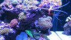 Kıvanç Öz Yeni Reef Tank 2010