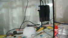 Akvaryum Kuluçka Makinası Nasıl Yapılır?