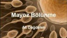 Mayoz Bölünme -Ali DAĞDE.....
