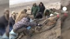 Rusya'da 30 Bin Yıllık Mamut Kalıntısı Bulundu