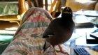 Şu Konuşan Kuşa Bakın!