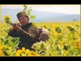 Plevne War