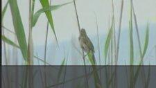 Sumru Parmaksızoğlu - Mini Mini Bir Kuş