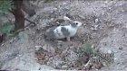 Tavşan Annenin şefkatı