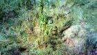 Erkek Kaplumbaga Dısı Kaplumbagayı Kovalıyor
