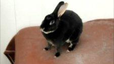 Tavşan'ın Çıkardığı Sese İnanamayacaksınız!