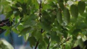 Selçuk Balcı - Çelik Bakışlı