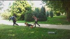 Profesyonel Köpek Eğitimi 2 - Bursa K9
