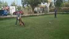 Profesyonel Köpek Eğitimi - Bursa K9