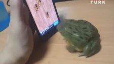 Kurbağıyı Akıllı Telefon İle Kandıran Çocuğun Kötü Sonu