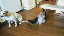 Karga Kediyle Köpeği Besliyor