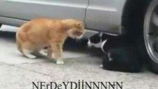 Kedi Sevgilisine Acayip Derecede Kızmış
