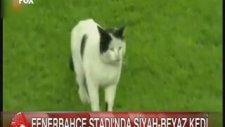 Fenerbahçe Stadında Siyah-Beyaz Kedi