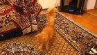 Mario Müziğine Ayar Olan Kedi