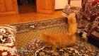 Kediyi Çıldırtan Bilgisayar Oyunu
